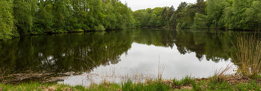 In the beautiful garden of Huize Boschoord is a private pond and it's located directly on the Vegelinbos