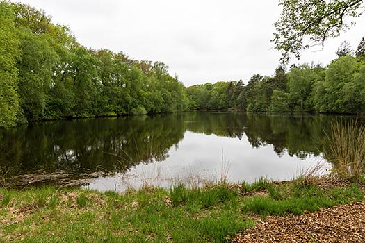 The pond of  bed & breakfast Huize Boschoord