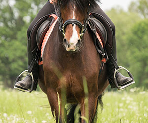 Horse riding in Friesland