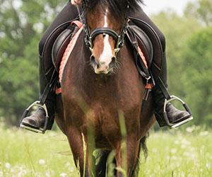 Paardrijden in Friesland